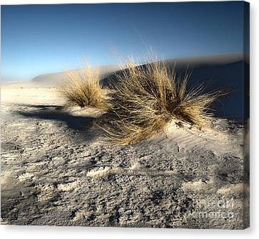 White Sands New Mexico Among The Dunes Canvas Print by Gregory Dyer