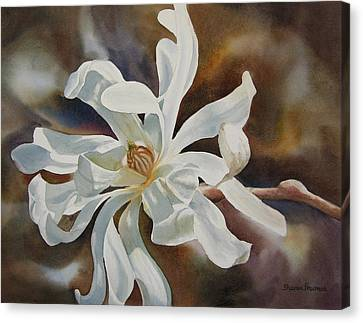 White Star Magnolia Blossom Canvas Print by Sharon Freeman