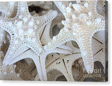 White Starfish Canvas Print by Carol Groenen