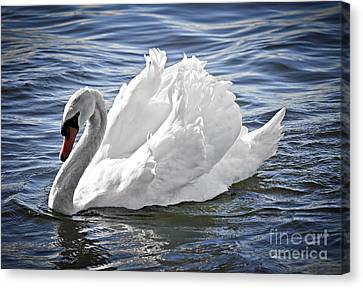 White Swan On Water Canvas Print by Elena Elisseeva