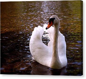 White Swan Canvas Print by Rona Black