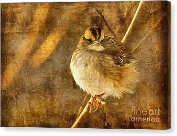 White Throated Sparrow Canvas Print by Lois Bryan
