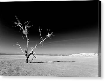 White Tree Canvas Print by Peter Tellone