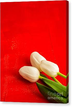 White Tulips Canvas Print by Edward Fielding
