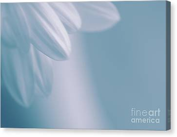 Whiteness 02 Canvas Print by Aimelle