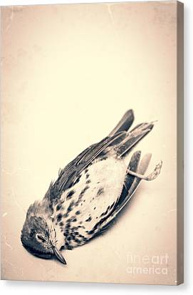 Who Killed Cock Robin Canvas Print by Edward Fielding