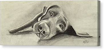 Why Are You Waking Me Up? Canvas Print by Marcello Cicchini