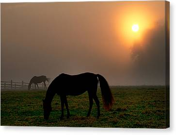 Widener Horse Farm At Sunrise Canvas Print by Bill Cannon
