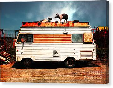 Wilbur The Pig Goes On Vacation 5d22705 Canvas Print by Wingsdomain Art and Photography