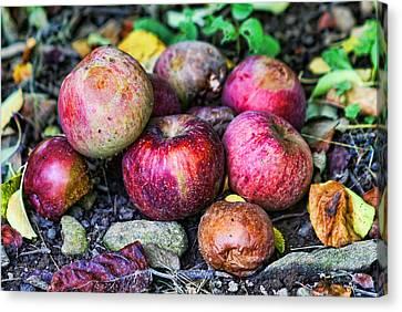 Wild Apples Canvas Print by Lee Dos Santos