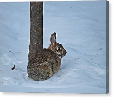 Wild Bunny Canvas Print by MTBobbins Photography