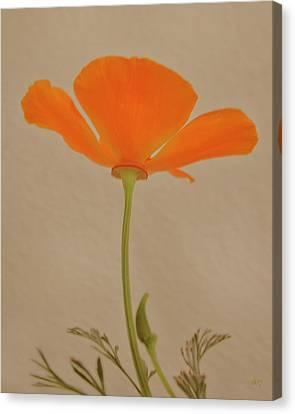 Wild California Poppy No 2 Canvas Print by Ben and Raisa Gertsberg