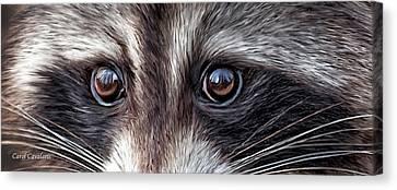 Wild Eyes - Raccoon Canvas Print by Carol Cavalaris