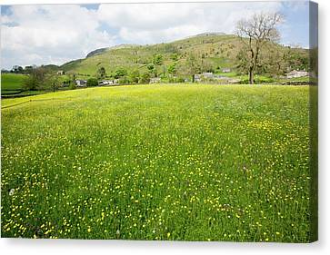 Wild Flower Hay Meadows In Austwick Canvas Print by Ashley Cooper