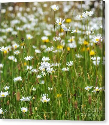 Wild Flower Meadow Canvas Print by Janet Burdon