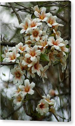 Wild Flowering Beauty Canvas Print by Kim Pate