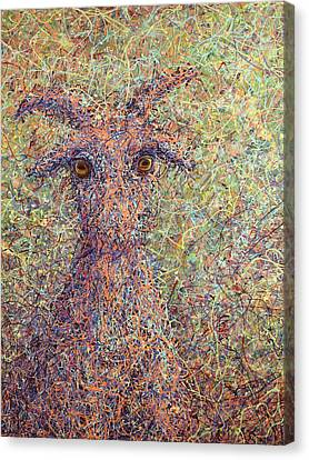 Wild Goat Canvas Print by James W Johnson