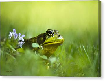 Wild Green Frog Canvas Print by Christina Rollo