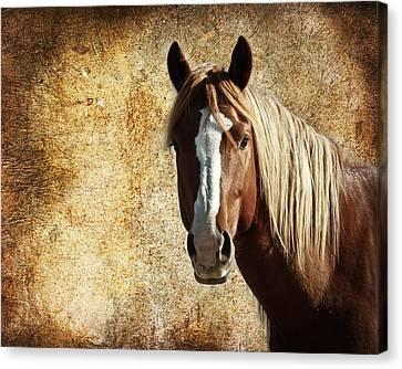Wild Horse Fade Canvas Print by Steve McKinzie