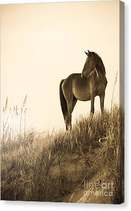 Wild Horse On The Beach Canvas Print by Diane Diederich