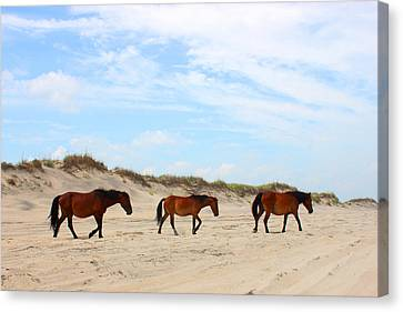 Wild Horses Of Corolla - Outer Banks Obx Canvas Print by Design Turnpike