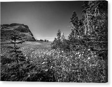 Wild Mountain Flowers Glacier National Park Canvas Print by Rich Franco