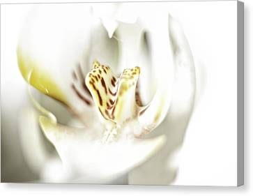 Wild Orchid Canvas Print by Erik Brede
