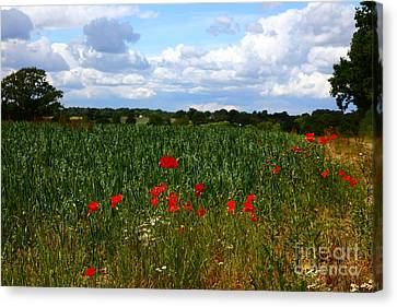 Wild Poppies And Corn Field Canvas Print by James Brunker