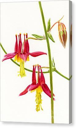 Wild Red Columbine Blossoms Canvas Print by Sharon Freeman