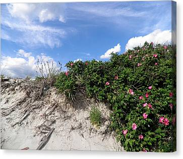 Wild Roses After High Tide Canvas Print by Kate Gallagher