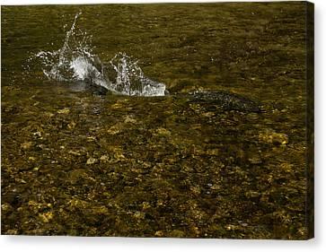 Wild Salmon River Run Canvas Print by Georgia Mizuleva