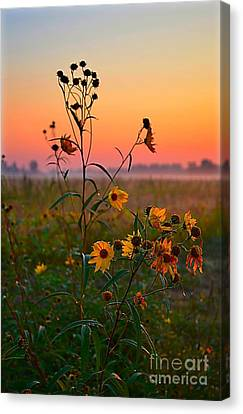 Wild Sunflowers At Dawn Canvas Print by Julie Dant