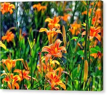 Wild Tiger Lilies Canvas Print by Chris Flees