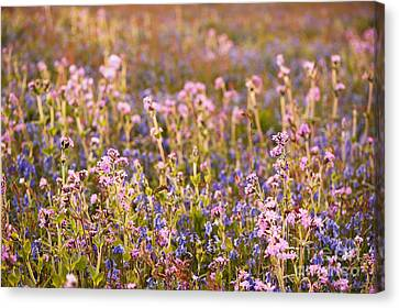 Wildflower Dusk Canvas Print by Anne Gilbert