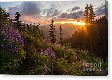 Wildflower Meadows Sunstar Canvas Print by Mike Reid