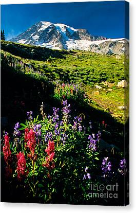 Wildflower Paradise Canvas Print by Inge Johnsson