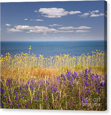Wildflowers And Ocean Canvas Print by Elena Elisseeva