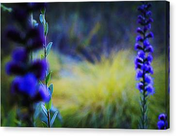 Wildflowers Canvas Print by Celestial Images