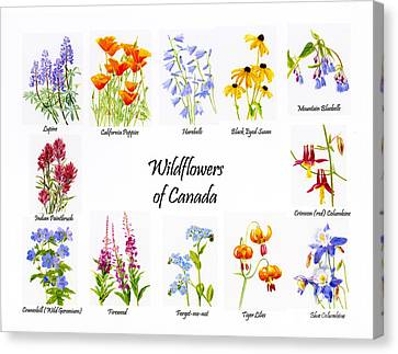 Wildflowers Of Canada Poster Canvas Print by Sharon Freeman
