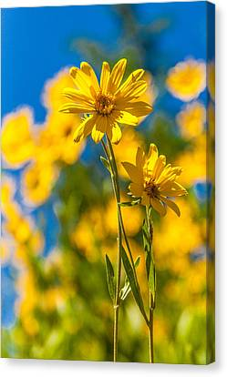 Wildflowers Standing Out Canvas Print by Chad Dutson