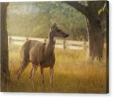 Wildlife Art - Look To The Horizon Canvas Print by Jordan Blackstone
