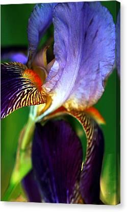 Wildly Colorful Canvas Print by Deborah  Crew-Johnson