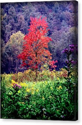 Wildwood Flowers Canvas Print by Karen Wiles