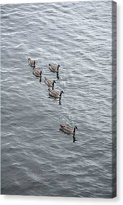 Willamette River Ducks Canvas Print by Peter French