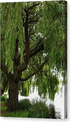 Willow Canvas Print by Mark Rogan