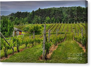 Willows Winery Canvas Print by Trey Foerster
