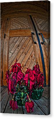 Wilted Canvas Print by Murray Bloom