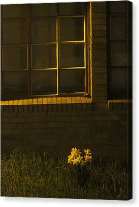 Wind And Window Flower Canvas Print by Guy Ricketts