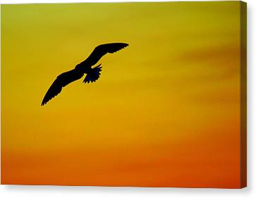 Wind Beneath My Wings Canvas Print by Frozen in Time Fine Art Photography