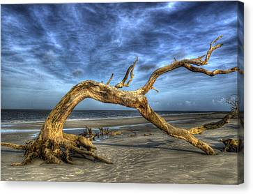 Wind Bent Driftwood Canvas Print by Greg and Chrystal Mimbs